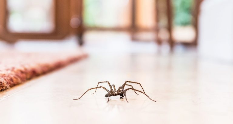 What Should You Do To Keep the Spiders out of Your House