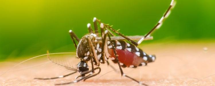 Mosquito Control Mornington